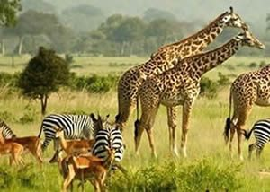 Safari Africa Wild Adventures