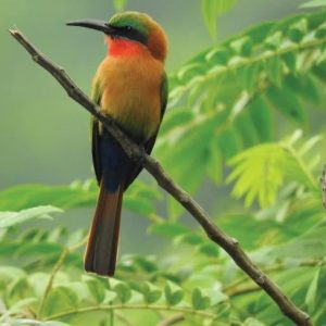 3 Days Birding Tour in Uganda