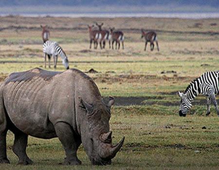 wildlife safaris Tanzania