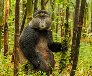 10 Days Wildlife and Gorilla trekking Tour