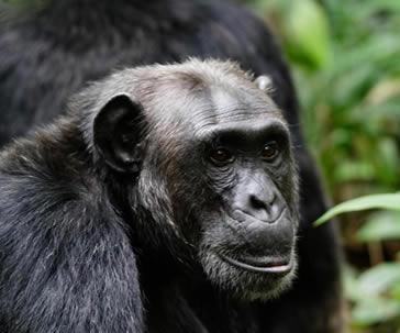 10 Days Wildlife and Chimpanzee Safaris