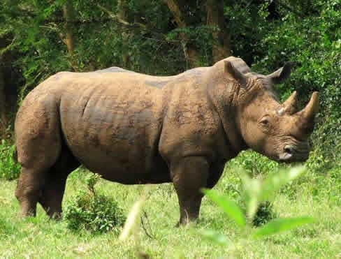 Rhino Tracking in Uganda
