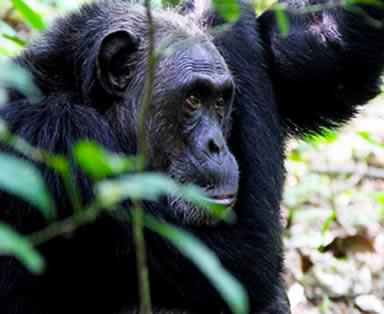 7 Days Wildlife and Chimpanzee Tour