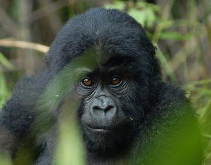 5 Days Rwanda Uganda Gorillas