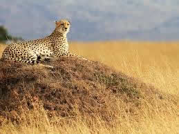 17 Days Wildlife Safari