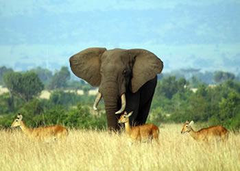 14 Days Wildlife & Gorilla Tour Uganda