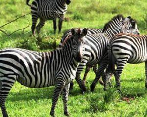 17 Days Wildlife Safari in Uganda