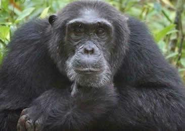 10 Days Primate Tour Uganda