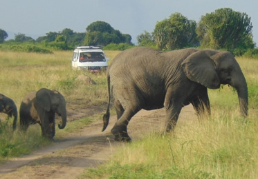 8 Days Flying Tour in Uganda