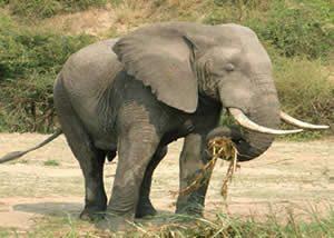 Wildlife Safaris Murchison Falls NP