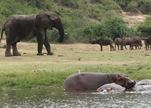Uganda Luxury Wildlife Tours