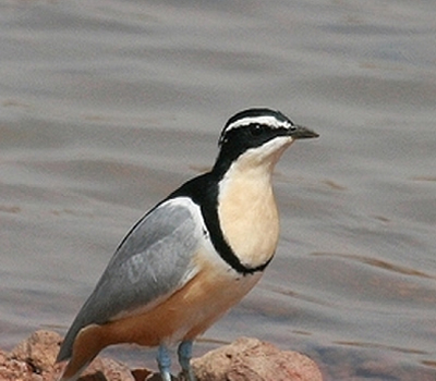1 Day Birding Tour Uganda