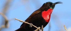 Bird watching in queen elizabeth