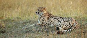Wildlife Safari Tours