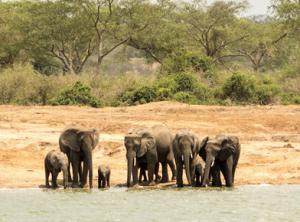 6 Days Uganda Wildlife & Gorilla Tour