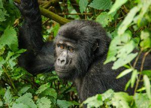 10 Days Primates Flying Tour