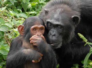 5 Days Honeymoon Safari in Uganda