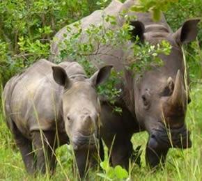 6 Days Wildlife Flying Safari