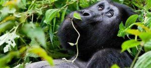 6 Days Honeymoon Safari in Uganda