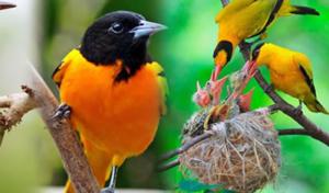 Bird watching safaris Uganda