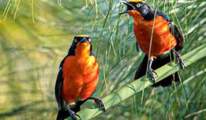 3 days Birding Tour Uganda