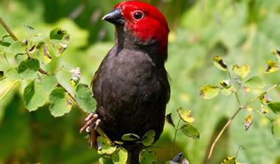 5 Days Birding Tour Uganda